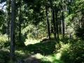 Ліс перед хребтом Кострича