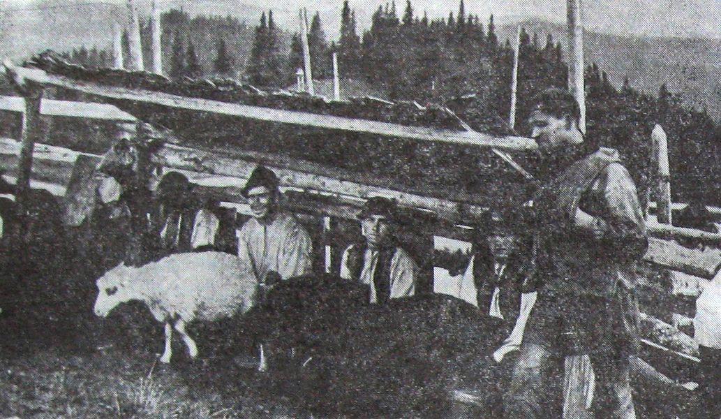 Іл.90. СТРУНКА. Доїння овець