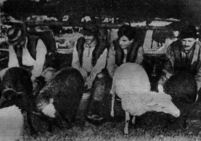 Іл.91. СТРУНКА. Доїння овець