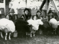 Іл.89. СТРУНКА. Доїння овець